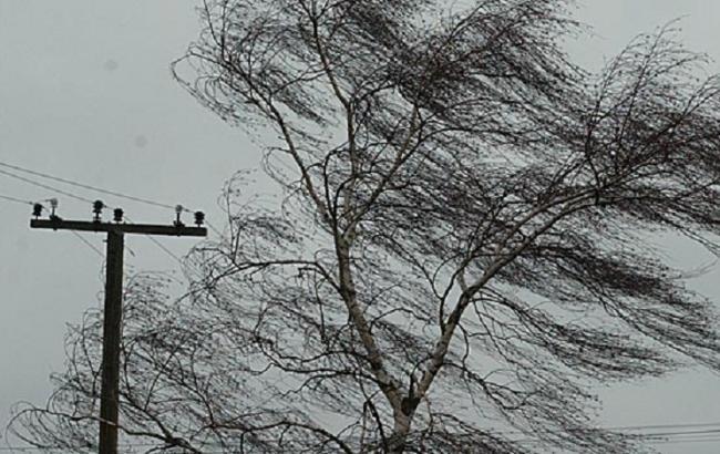 Фото: во Львовской области порывы ветра обесточили несколько населенных пунктов