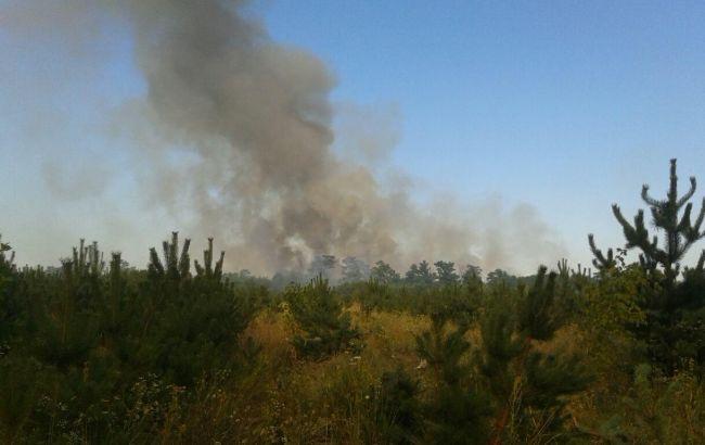 Фото: пожар в экосистеме (пресс-центр ГСЧС)