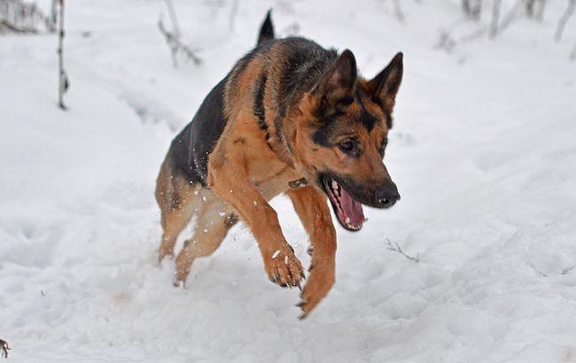 Фото: в Україні місцями сніг