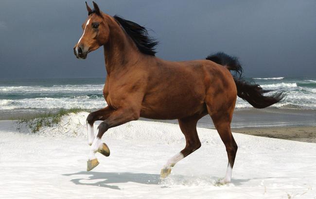 Фото: Кінь