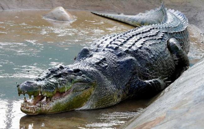 Фото: Крокодил (masterok.livejournal.com)