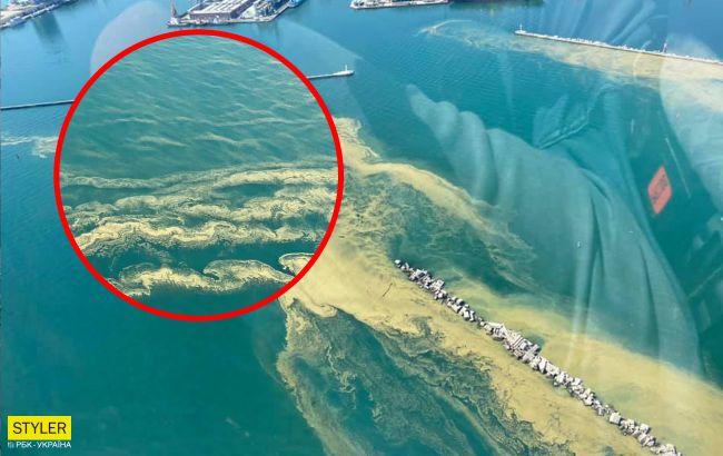 Черное море снова позеленело: купаться не рекомендуется