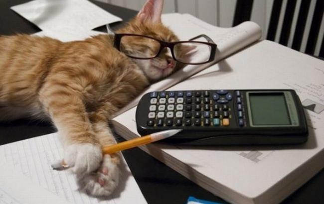 Как бы выглядел офис, если бы твой шеф был котом