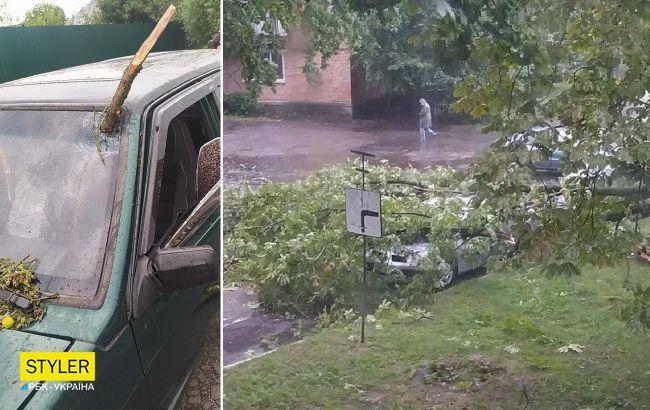 Буревій під Полтавою зривав дахи та дерева, пробивав гілками авто та занурив область у темряву