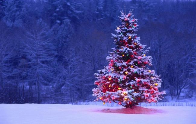 Фото: Новогодняя елка (wallpaper.zone)