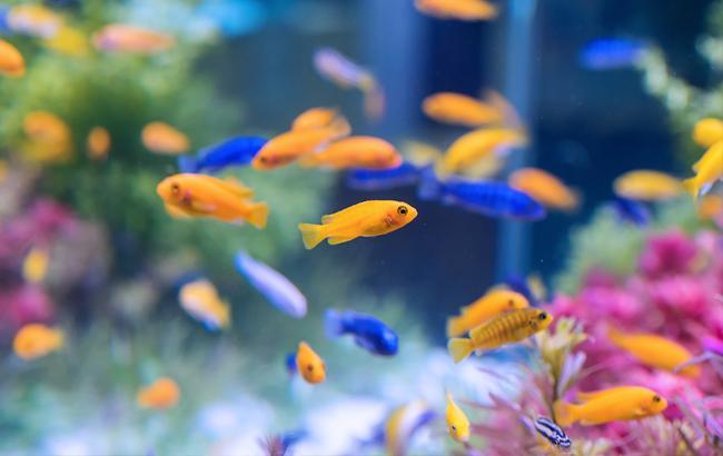 Дизайнер з Прикарпаття створює унікальні акваріуми