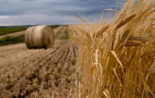 """Украина торит в Китай свой """"Великий зерновой путь"""""""
