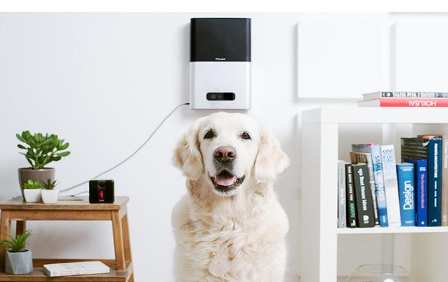 Фото: Petcube знову збирає кошти на Kickstarter (kickstarter.com)