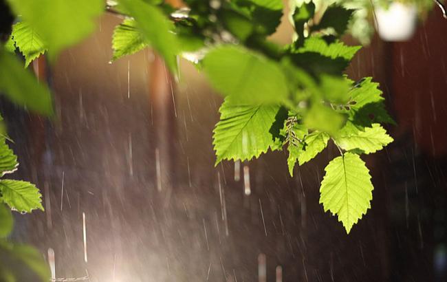Фото: в Украине местами дожди