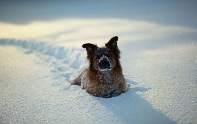 Синоптики: сначала недели вгосударстве Украина дожди имокрый снег