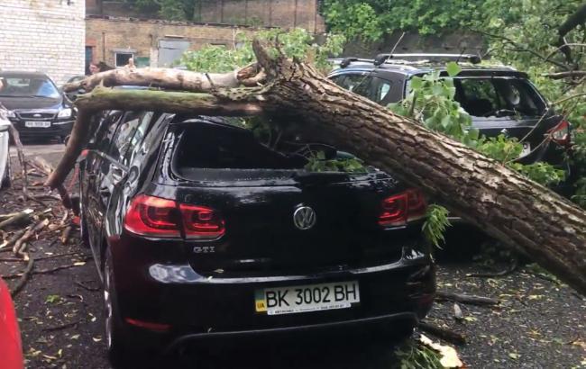 Негода в Києві повалила дерева та пошкодила машини