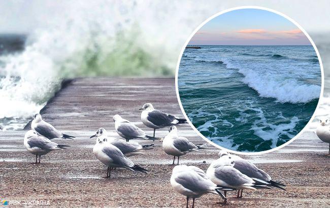 Грозы, ливни и жара: какой будет погода на морских курортах Украины в последнюю неделю лета