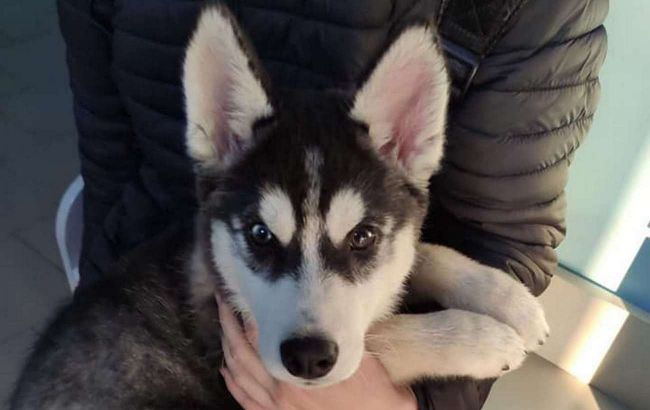 В Житомире женщина жестоко издевалась над собакой: вывесила животное в окно