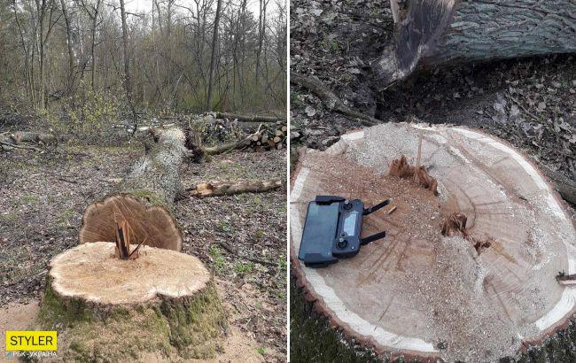 У Пущі-Водиці зрубали вікові дуби заради нової забудови (фото)