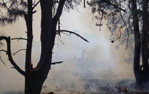 Пожар на острове Хортица: полиция начала проверку