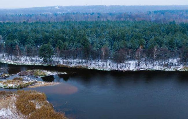 В Чернобыле впервые заметили птицус голосом человека (фото)