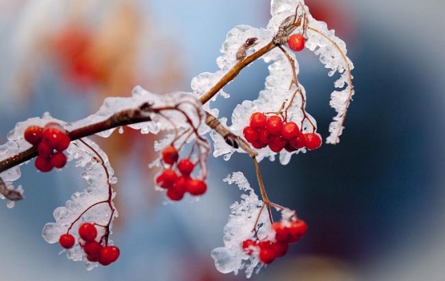 Фото: в Україні очікуються заморозки