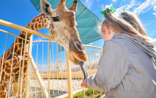 В зоопарке под Киевом родился детеныш жирафа: самые милые фото