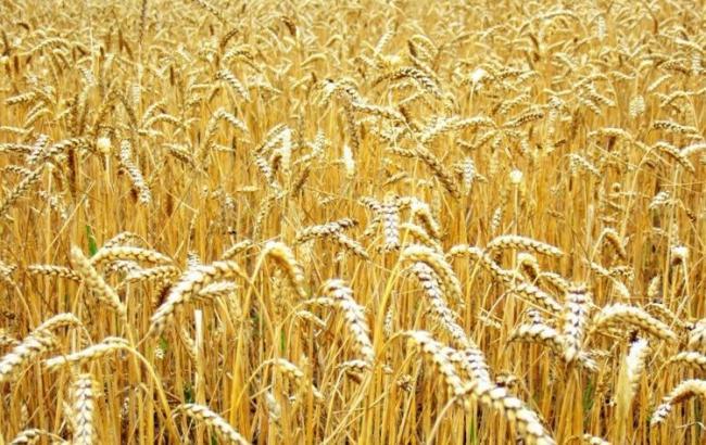 Фото: у Мінап оцінили стан посівів зернових та технічних культур