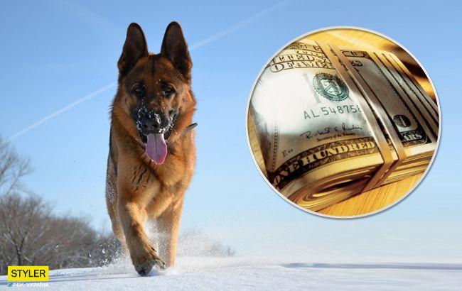 В Бердичеве собака принесла хозяевам сверток с крупной суммой денег