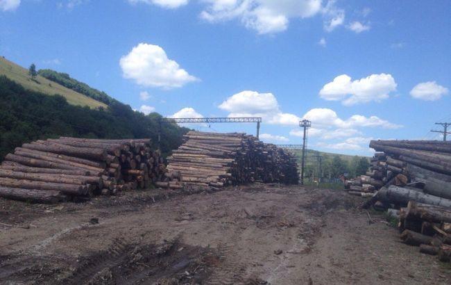 Фото: незаконно вырубленный лес-кругляк