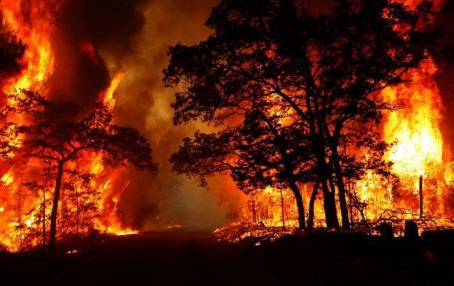 Фото: пожар в зоне АТО