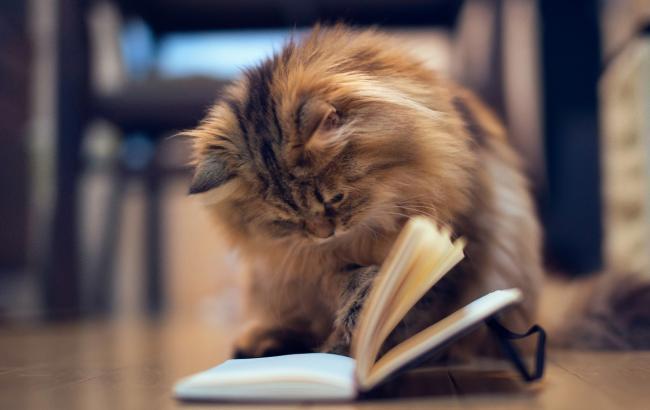 Фото: Кіт з книгою (wallpapersis.com)
