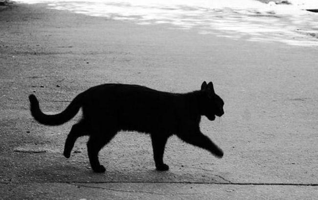 В Винницкой области из-за кота произошло ДТП, погибли 2 человека