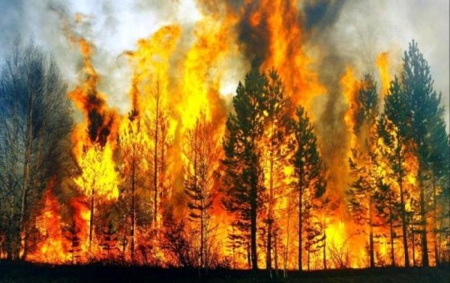В районе Фукусимы почти неделю тушат масштабные лесные пожары