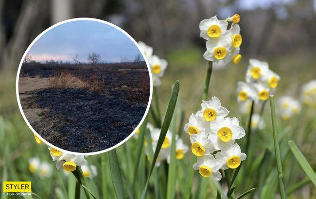 На Закарпатті згоріла знаменита Долина нарцисів: знищено півгектара
