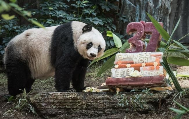 Фото: Цзя Цзя празднует 37-й день рождения (bugaga.ru)