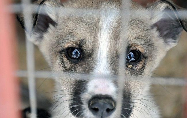 Названі нові штрафи за знущання над тваринами