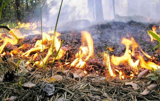 Фото: на военном полигоне после применения систем залпового огня загорелся лес