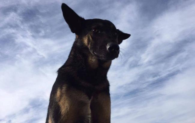 Фото: Собака Маси Найєма (facebook.com)