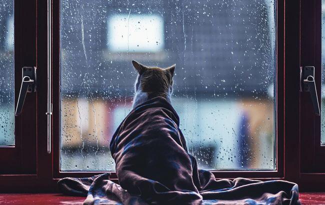 Фото: в Украине дожди