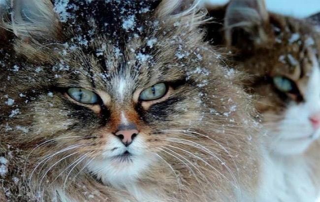 Фото: Ночью по Украине ударят морозы (bbc.ru)