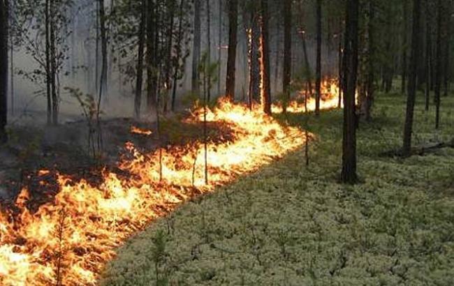Синоптики попереджають про високий рівень пожежної небезпеки в Україні 4-6 червня