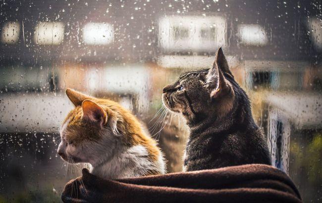 Фото6 в Украине ожидаются дожди
