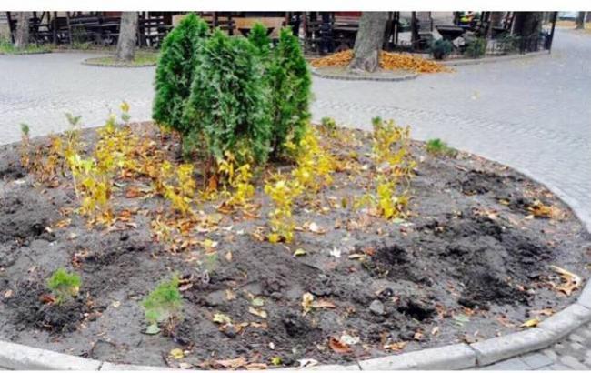 Фото: На клумбі викопали кущі (facebook.com/КП-УЗН-Подільського-району)