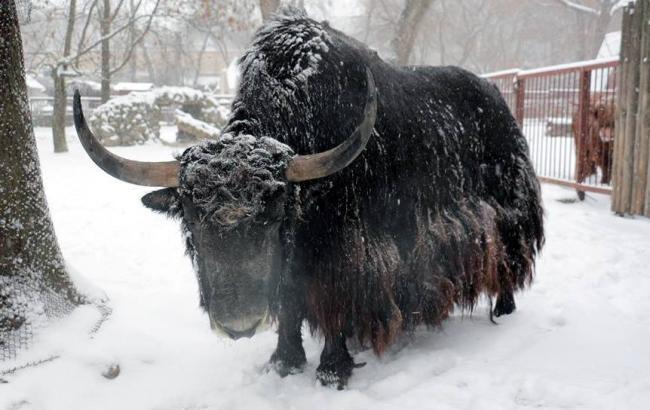Фото: Обитатель Киевского зоопарка (facebook.com)