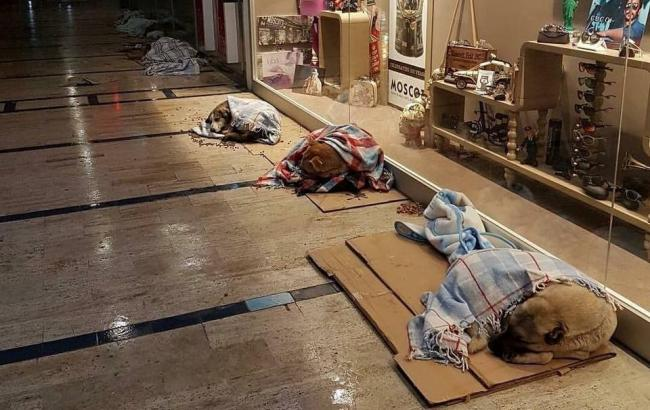 Фото: Собаки в магазине в Стамбуле (facebook.com)