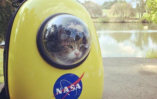 """Фото: кіт у """"космічній"""" сумці для тварин"""