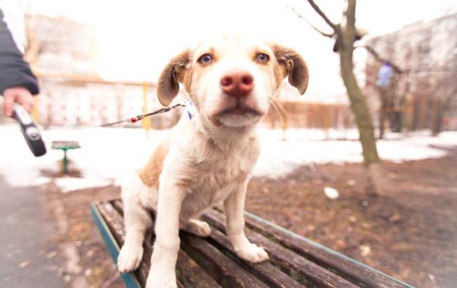 Волонтеры разыскивают дом щенку со сладким именем Пирожуля