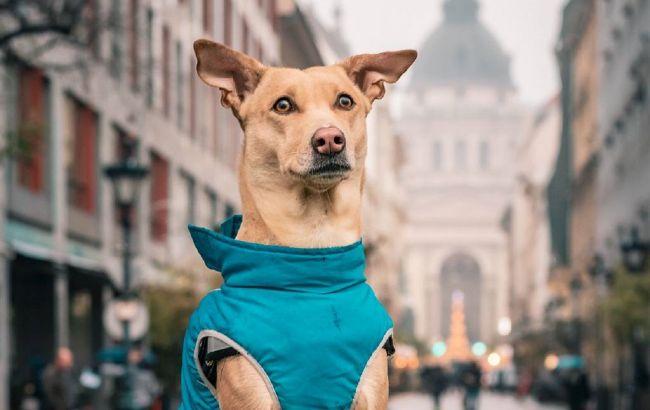 Собака из Киева проехала 30 стран и 116 городов: милая история спасенного щенка