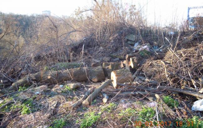 В Киеве начали массовую вырубку деревьев для новой застройки на исторической горе
