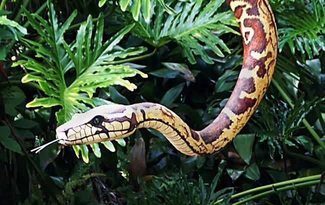 В США мужчину оштрафовали за прогулку со змеей
