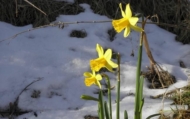 Синоптик пообіцяла українцям сніг