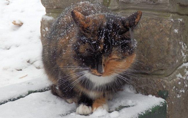Фото: Холодная погода (pixabay.com/Eirena)