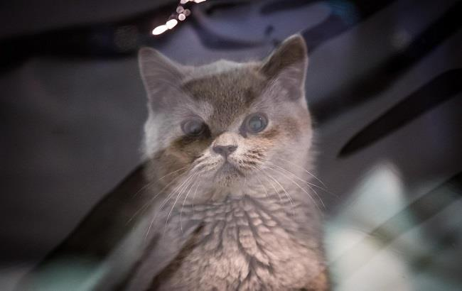 Фото: Кіт (РБК-Україна)