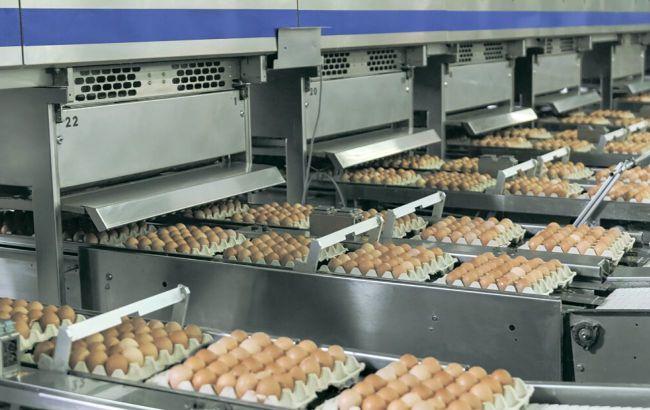 Производство яиц в Украине упало на 16%. У Бахматюка обвиняют НАБУ